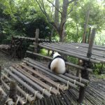 Panda who left.