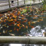 Fishies.