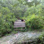 Red Panda on some logs.