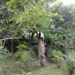Panda in a tree 2.0.